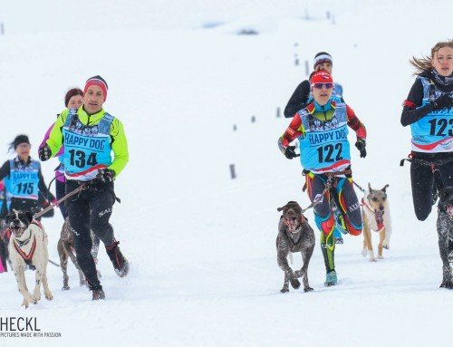 1. Schnee-Canicross-Rennen Österreichs