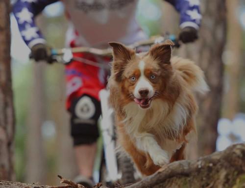 dog & sport Abo 2017