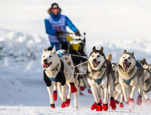 600 km auf vier Pfoten – Femundløpet 2017