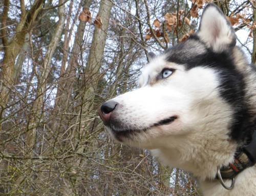 Fit für die Wander- und Dogtrekking-Saison 2017?