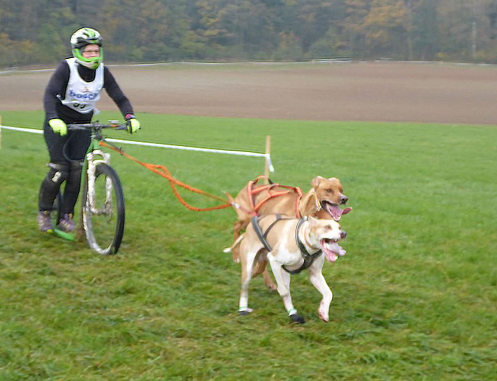 22. Schlittenhunderennen in Oberndorf vom 3. bis 5. November 2017