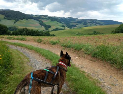Dogtrekking made in Austria: Bucklige Welt 2018