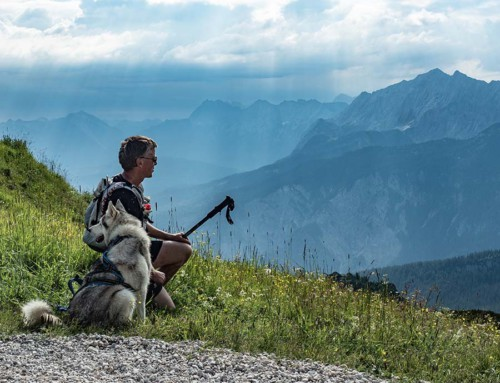 Zugspitz Dogtrekking 2018: Eine Bilanz.