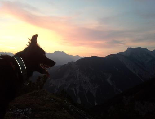 Karwendel Dogtrekking 2018: Das Rollen zum Geröll