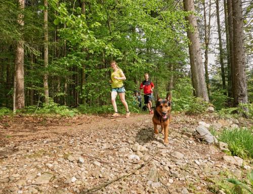 ARBERLAND Ultra Trail 2019: Genießen mit allen Sinnen!