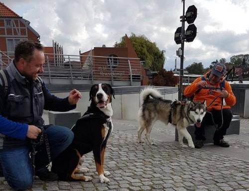 3. Platz: Epi Dog rockt das 1.Dogtrekking Brandenburg!