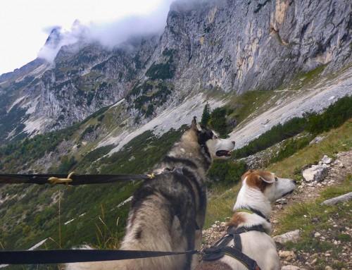 Der goldene Dogtrekking September 2019: Harz, Hochkönig, Karwendel und Untersberg.