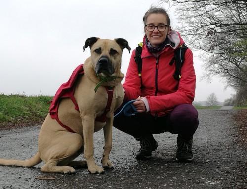 Ein Hund namens Adam läuft: Für den Tier- und Naturschutz